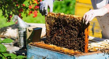 Liste des apiculteurs souhaitant recueillir des essaims d'abeilles en 2019